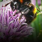 Bumblebee by Josie Jackson