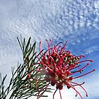 Grevillea against Sky by Graeme  Hyde