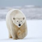 Arctic Hunter by Gina Ruttle  (Whalegeek)