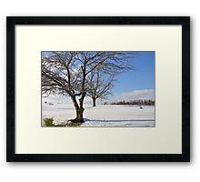 Winter trees 11/30/2011 Framed Print