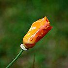 Closed Orange Bloom by rafstardesigns