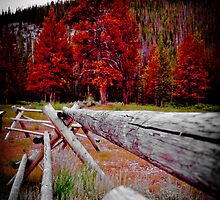 Rustic Idaho by Chad M