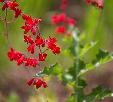 Fleur #3 by Delphine Comte