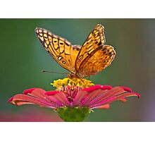 Monarch Photographic Print
