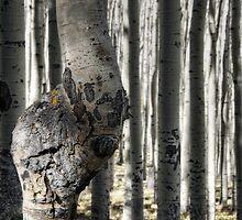 Winter is Just Around the Bend  by Saija  Lehtonen
