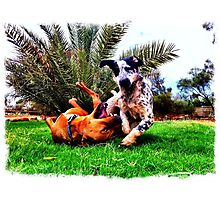 Outback Pups Photographic Print