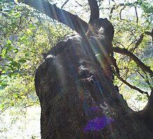 My favorite tree by marilittlebird