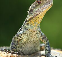 Australian Water Dragon by Barry Armstead