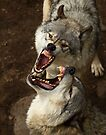 """Smiles, everyone, smiles!"" - Timber Wolves by Jim Cumming"