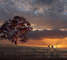 Mt Franklin, Victoria by Lloyd Mouat