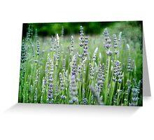 ~ Lovely Lavender ~ Greeting Card