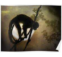 Moon Monkey Poster