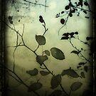 Through a Glass Darkly by Sybille Sterk