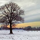 Lone Tree by Sally-Outram
