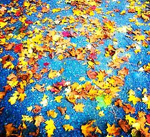 Autumn Leaves by lmulholland
