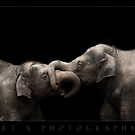 Mali and Ongard II by ArtX