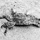 Black & White Crab by Paige