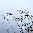 Grasses by Deborah Mosier