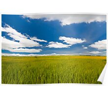 rice farm under the blue sky  Poster