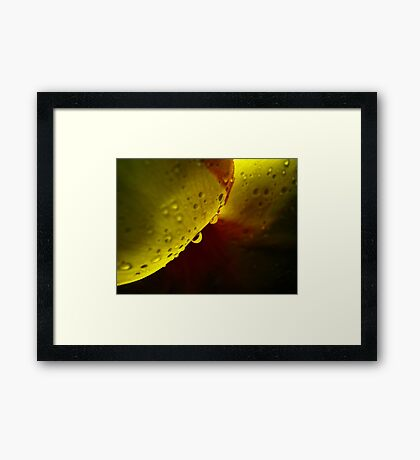 raindrop on flower Framed Print
