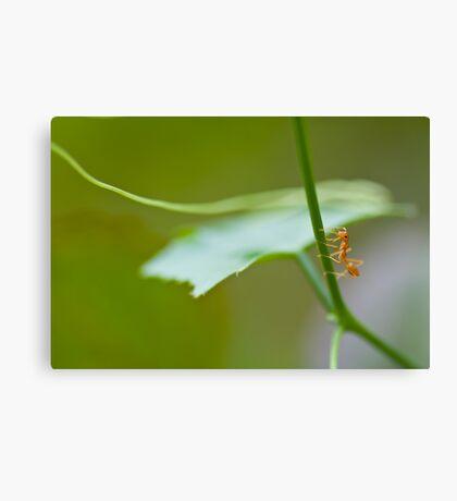 ant Canvas Print