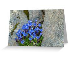 Blue Swiss Alpine flowers Greeting Card