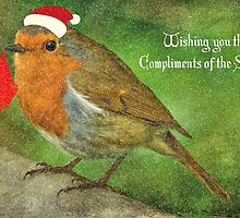 Merry Christmas Robin Redbreast  by Catherine Hamilton-Veal  ©