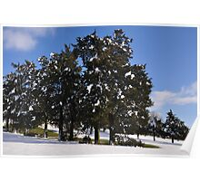 Snow- capped Evergreens Poster