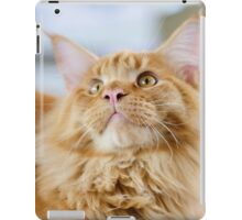 Red-white tabby Maine Coon cat iPad Case/Skin