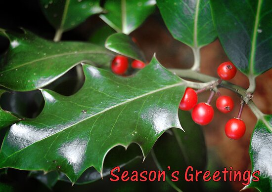 Season's Greetings - Holly by Gillian Cross