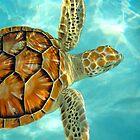 Baby Sea Turtle by Lee Harvey