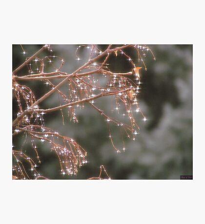 Diamond Tree Photographic Print