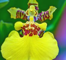 Whatkinda Orchid (Dancing Lady) by Glenn Cecero