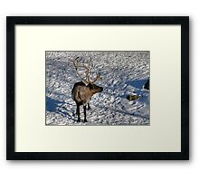 Whats that I see? Framed Print
