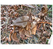 dried leaves Poster