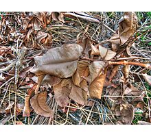 dried leaves Photographic Print