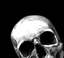 skull on black by aaronnaps