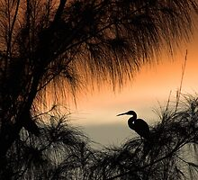 Home to Roost by John Edwards