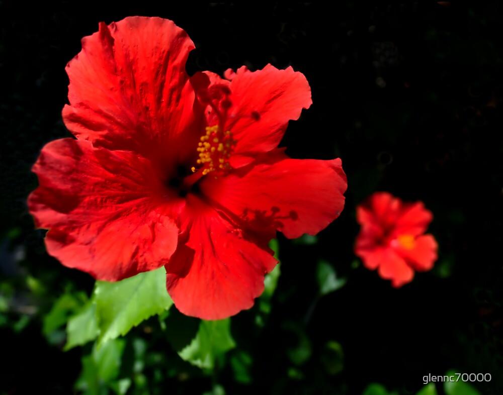 Sunshine Hibiscusi by glennc70000