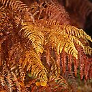 Golden Fern  by jaffa