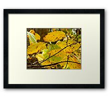 Nature Up Close - 2       ^ Framed Print