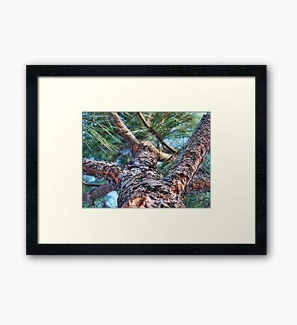 Rocky's Escape Framed Print