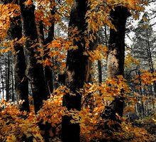Autumn Memoirs  by Saija  Lehtonen
