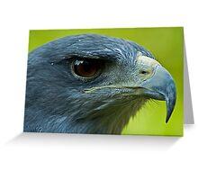 Chilean Blue Eagle Greeting Card
