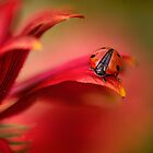 Simply red by Mandy Disher