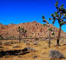 Rockpiles of Joshua Tree National Park by Ron Hannah