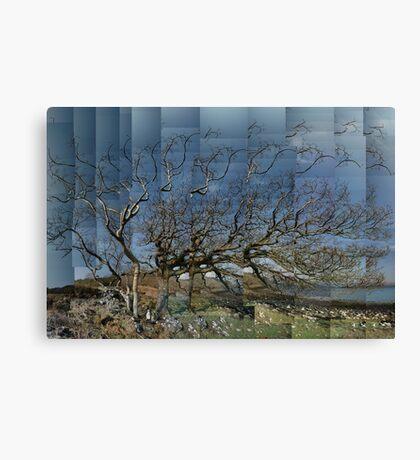 Stretching Oak Canvas Print