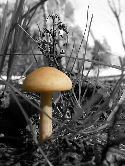 Honey~Stool by Esther's Art and Photography