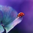 Ladybird....... by Ellen van Deelen