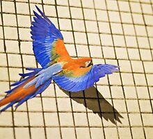 Take flight by Ian  Pearce